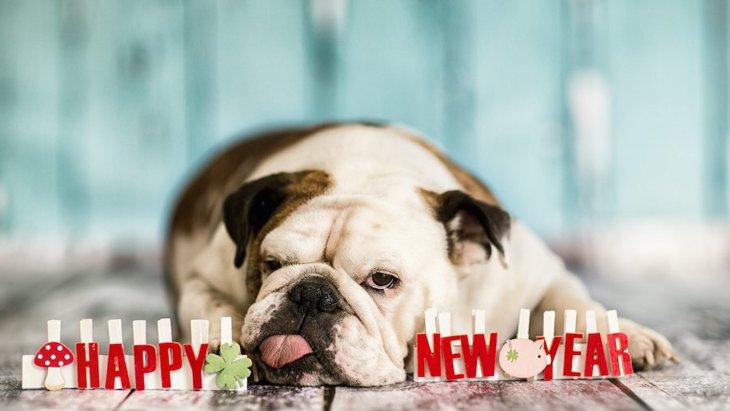 犬が絶対食べてはいけない『年末年始の食べ物』4選