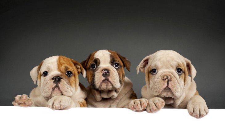 犬に悪い印象を持たれる人の特徴3つ