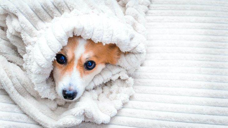犬が病気になってしまう『絶対NG行為』5選