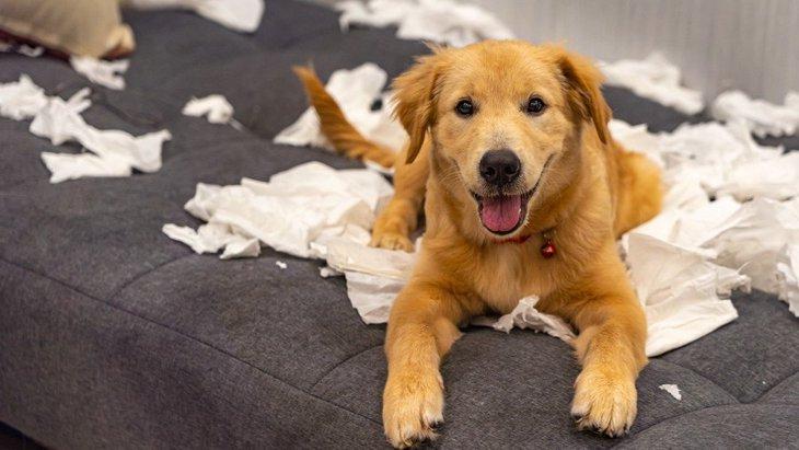 犬がイタズラを隠している時にする仕草や行動5つ