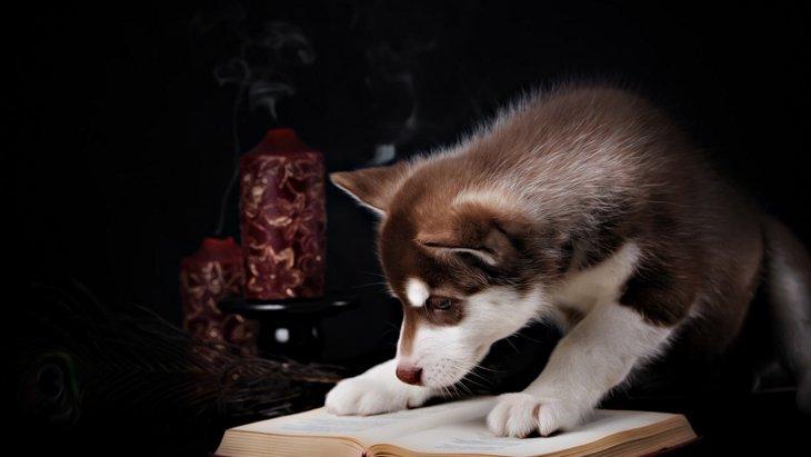 犬にまつわる5つの迷信