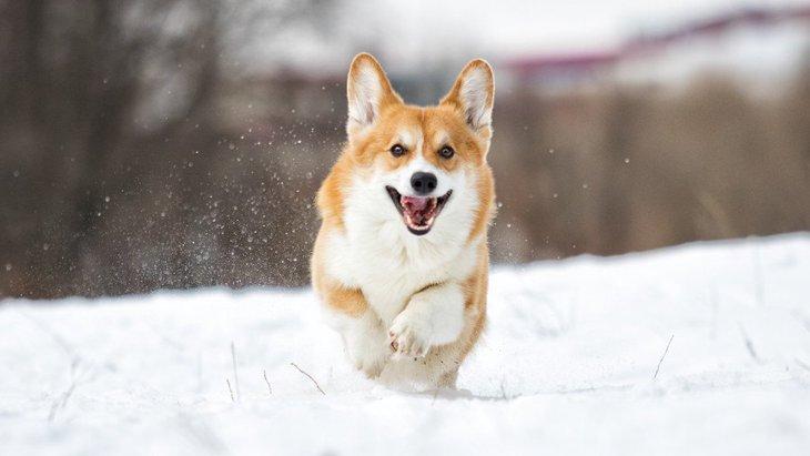 犬の寒さ対策は何をすればいいの?