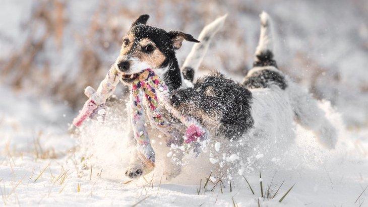 犬と一緒に楽しめる冬のアクティビティー6選