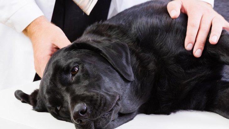 珍しいタイプで危険度の高い犬の不整脈の新しい治療方法が開発された!