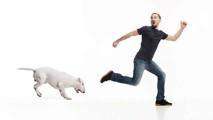 犬から『嫌がられる人』に共通する3つのこと NG行為から好かれる方法まで解説