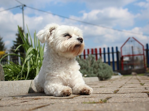 犬が保冷剤を誤飲した時の対策や熱中症対策