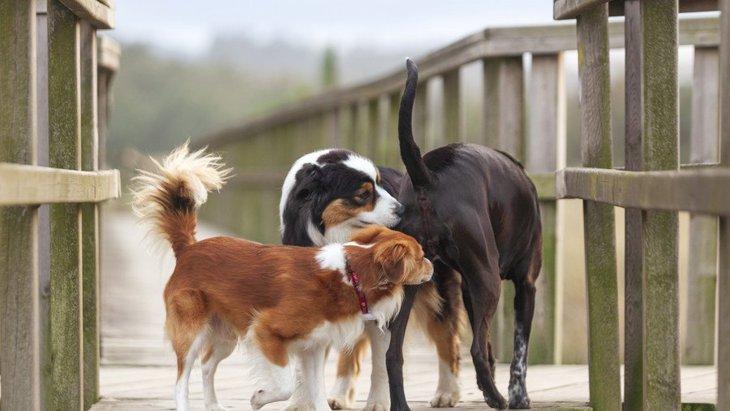 初対面の犬同士がよくする3つの行動