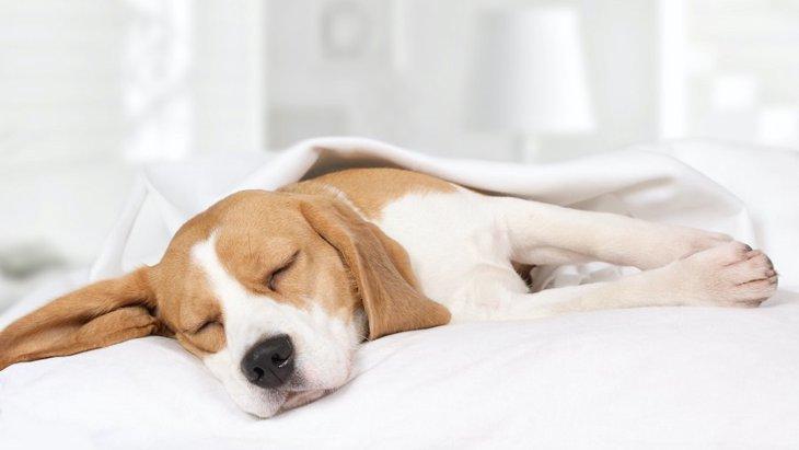 病気のサインかも?犬の危険な『いびき』4つ