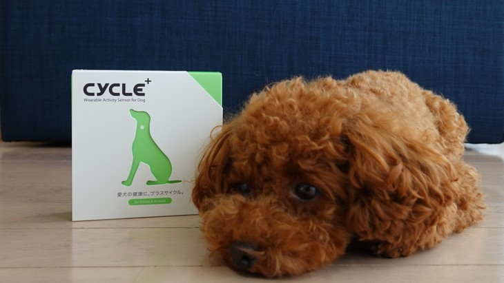 体調異変を事前に察知!愛犬を見守るペットのための活動量計『Plus Cycle』