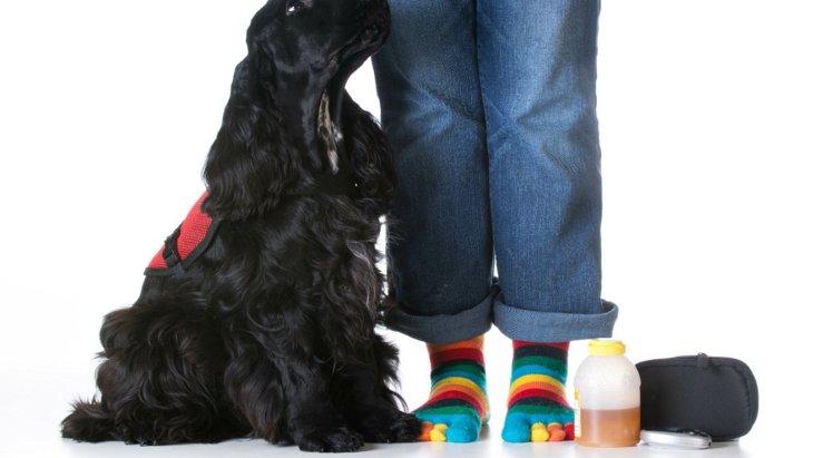 てんかん発作を予測する犬は何を手がかりにしている?【研究結果】