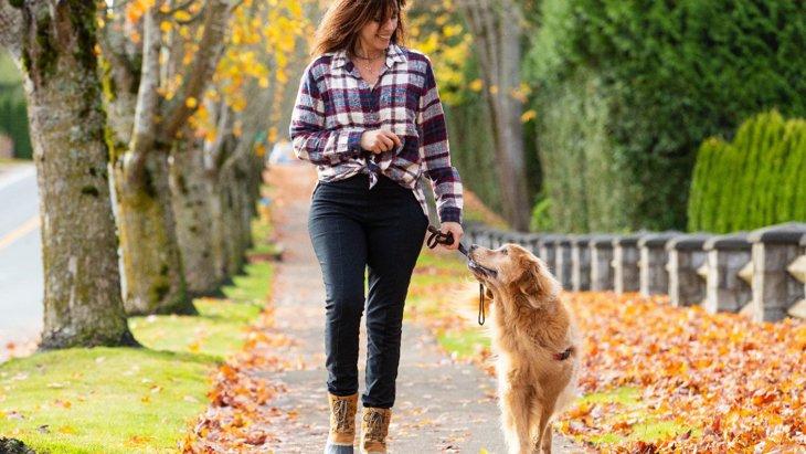 犬の散歩中に飼い主がしてはいけないNG行為5選