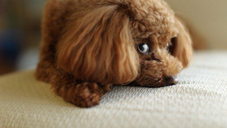 犬が飼い主の遊びの誘いに乗らない時の心理4つ