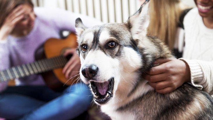 『ポップスよりもクラシック!?』犬は音楽を理解できるのか