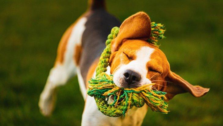 犬がおもちゃを破壊してしまう理由3つ!長く使ってもらうための対策は?