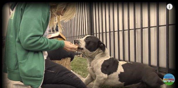一緒に捨てられていた!人の愛情に飢えていた仲良し犬2頭の保護