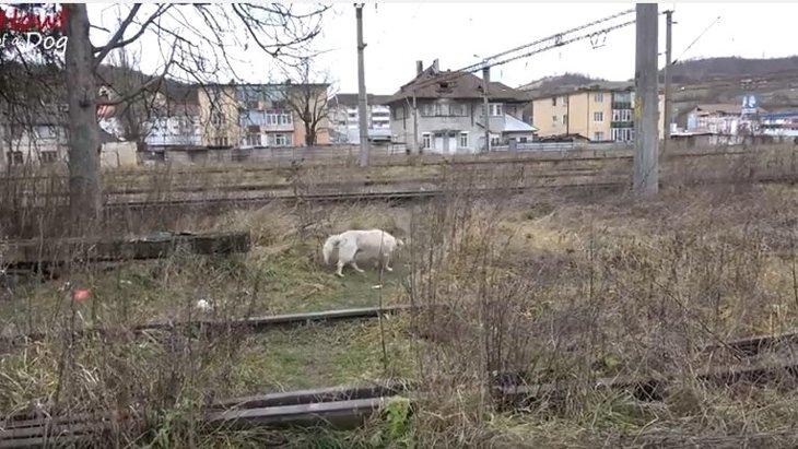 「もう犬はいらない。引き取ってくれ。」線路を徘徊していた捨て犬