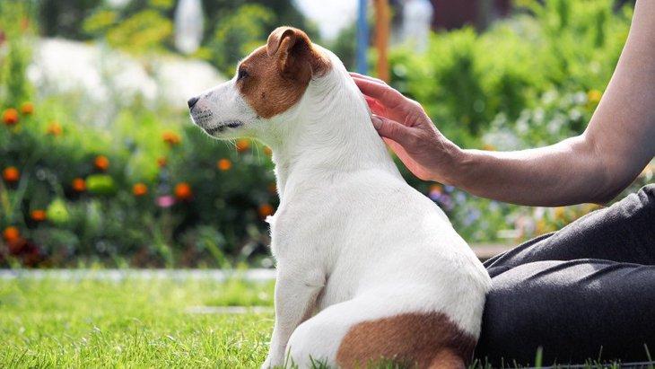 犬が飼い主に『お尻をぶつけてくる』心理4選!良い意味なの?それとも悪い意味?