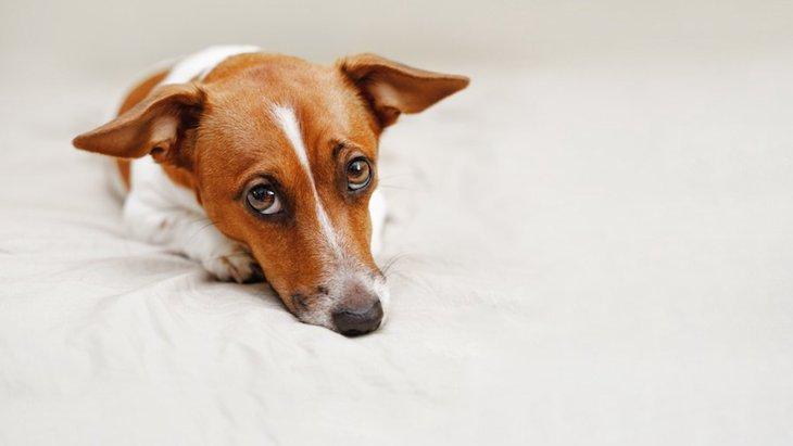 愛犬が震えている!寒い?それとも病気?3つの原因