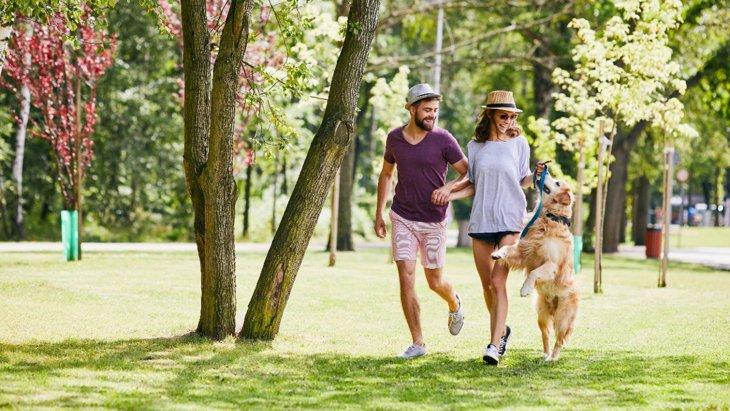 『寿命が短い犬種』2選!共通する特徴や飼う時に注意するポイントを解説