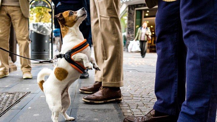 人が多い場所で愛犬と歩く時の『NG行為』4選