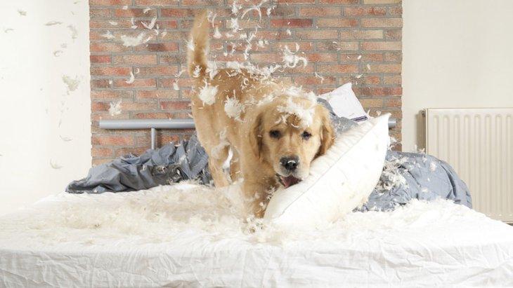 犬が寝る前に興奮してしまう理由とやりたい対策