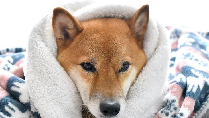 なぜ犬は『飼い主のニオイがするもの』が好きなのか?2つの理由