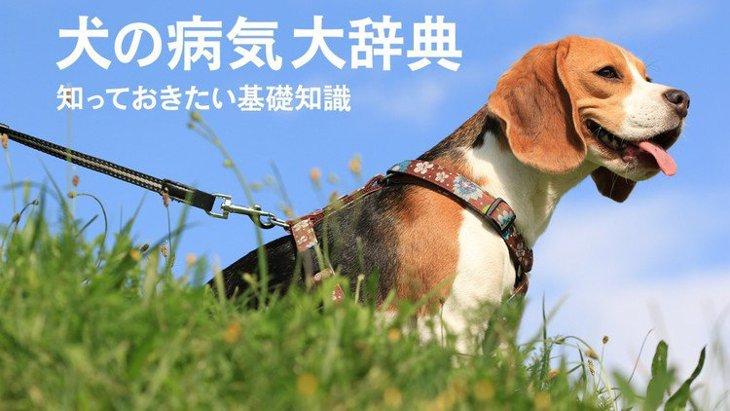 犬の病気大辞典!知っておきたい基礎知識