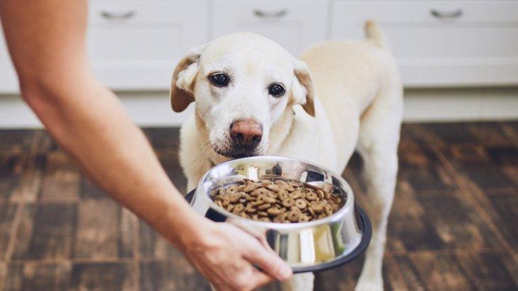 犬がご飯を好き嫌いするときの対処法3選!どうすれば素直に食べてくれるの?