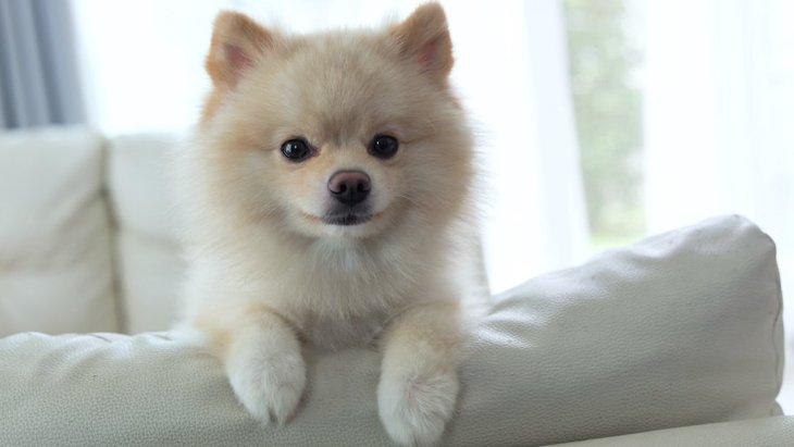 犬と過ごす室内では『明るい』『暗い』どっちがいいの?