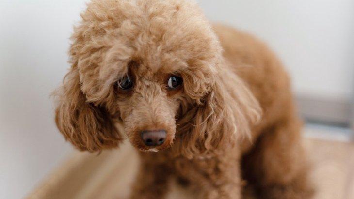 犬が固まって動かなくなる時によくある理由5つ