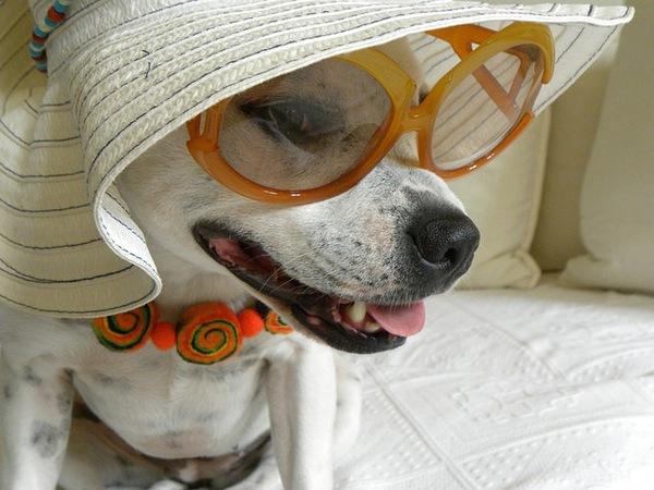 犬を擬人化すると、こんな有名人に!