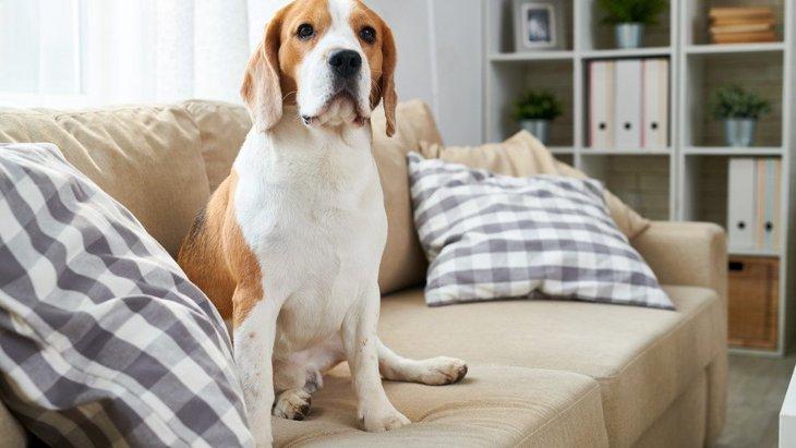 犬との生活で考えたい!家具の選び方4つ