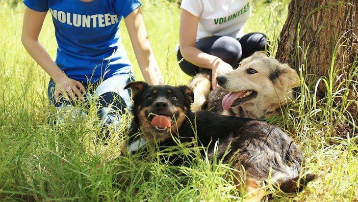 短時間でも撫でられることが保護施設の犬にプラスの影響【研究結果】