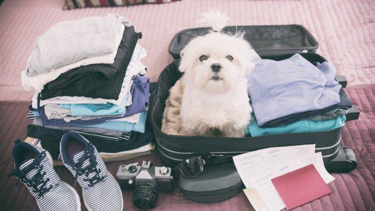 犬との旅行に持っていくと便利なもの6つ