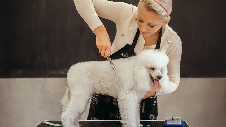 ちょっと気になる!『犬関連の仕事の給料』ってどうなっているの?