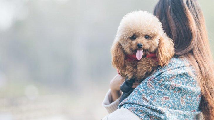 犬も大切な家族!でも…。犬を人間のように扱うリスク5つ
