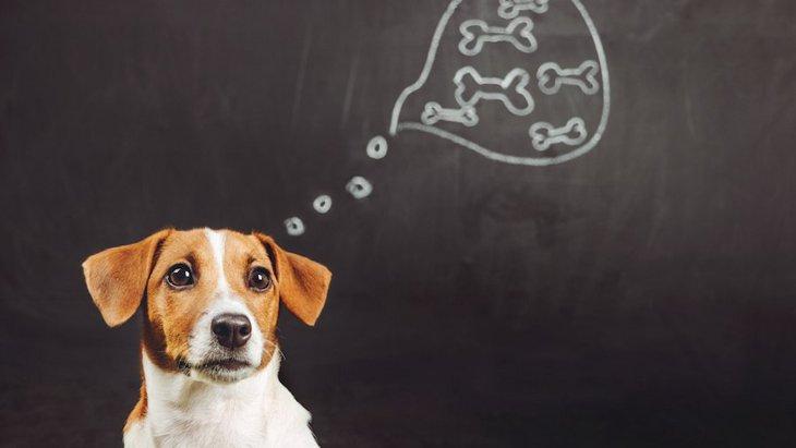 犬がする『賢い行動』3選