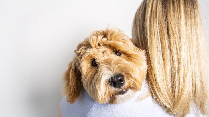 可愛い♡犬が『抱っこしてほしい』時の行動3選