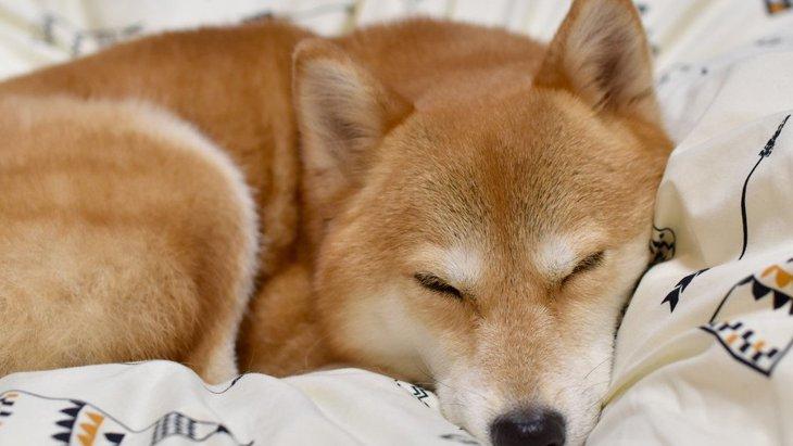 犬が飼い主の首元で寝る心理4つ