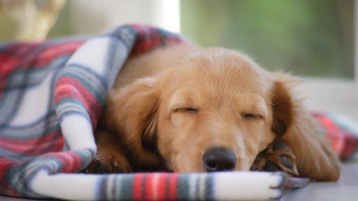 これがないと眠れない!犬にも愛着が湧くものってあるの?