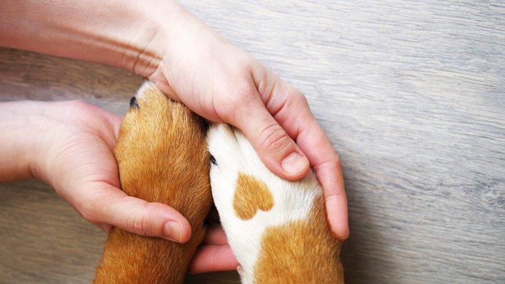 犬が足を触られるのを嫌がる3つの理由