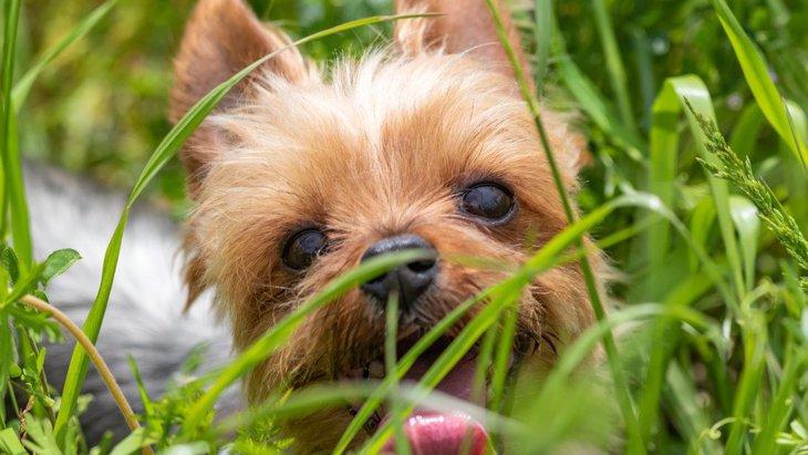 実は危険な『犬のお散歩の仕方』5選!草むらを自由に歩かせるのはダメなの?