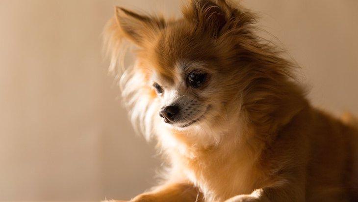 犬が洗剤を舐めた!危険性や対処法について