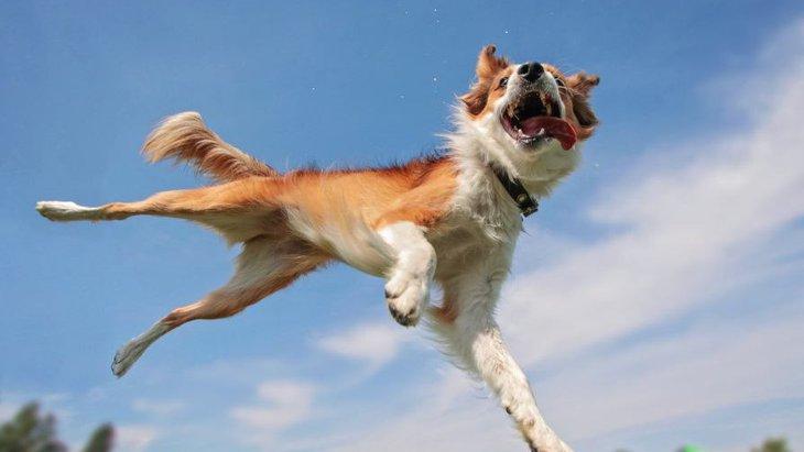 犬が興奮しすぎてしまう原因5選!NG行為から落ち着かせるための対処法まで解説