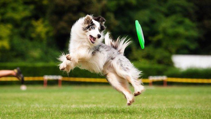 愛犬とドックスポーツに挑戦するには?