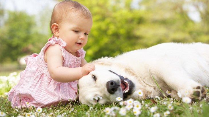 小さな子どもがいる家でも飼いやすい犬種5選