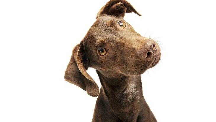 犬が『耳の病気』になっている時に出る症状4選!状況別の対処法とは?