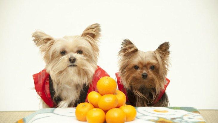 年末年始のご馳走で犬が絶対に食べてはいけないもの3つ