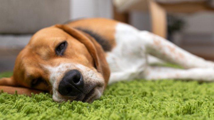 犬が『高熱』を出している時のサイン6つ