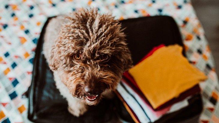 犬は飼い主の行動を予測して動いている?